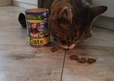 Verm-x-za-mačke