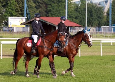 Erman-Equine-America