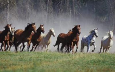 Elektroliti za konja – sve što trebate znati te način izrade vlastitih!