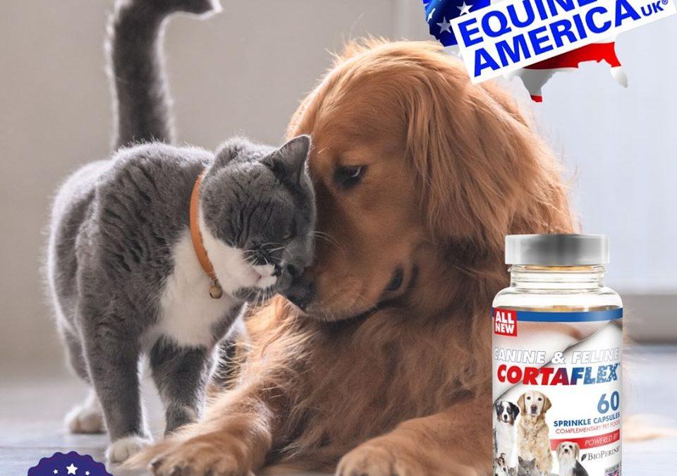 Glukozamin za pse kod psećeg artritisa?