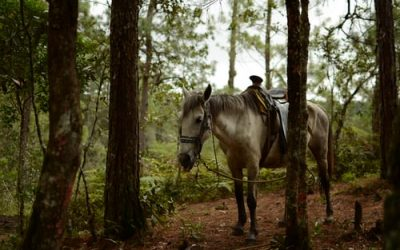Cushingov sindrom kod konja