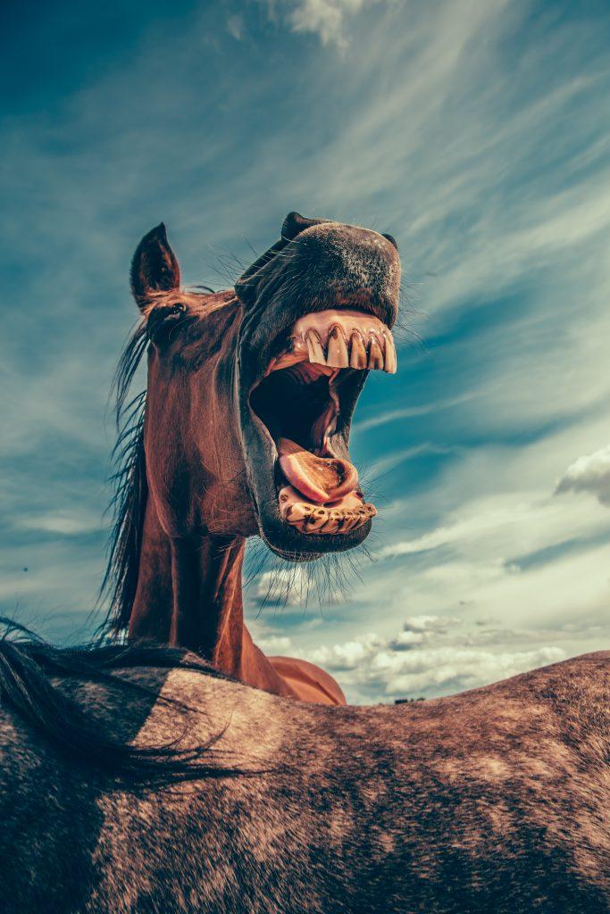 konjski zubi