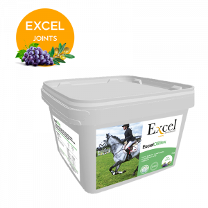 Za zdrave konjske zglobove Excel OliFlex