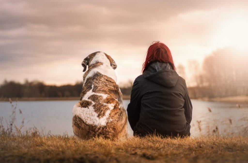 Stariji psi i kako im pružiti najbolji život