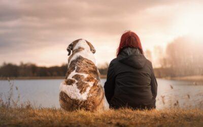 Stariji psi i kako jim pružiti najbolji život
