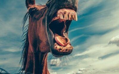 Konjski zubi i kad na pregled?
